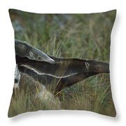 Giant Anteater And  Young In Cerrado Throw Pillow