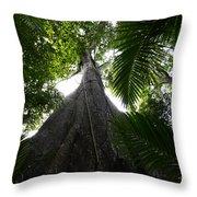Giant Cashew Tree Amazon Rainforest Brazil Throw Pillow