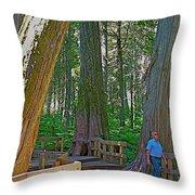 Giant Cedar Grove On Giant Cedars Trail In Mount Revelstoke Np-bc Throw Pillow