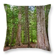 Giant Cedars On Trail Of The Cedars In Glacier Np-mt Throw Pillow