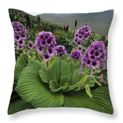 Giant Daisy In Full Bloom Campbell Throw Pillow