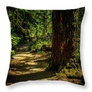 Giant Douglas Fir Trees Collection 2 Throw Pillow