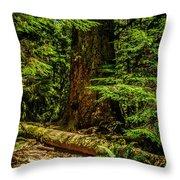 Giant Douglas Fir Trees Collection 3 Throw Pillow