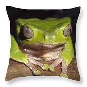 Giant Monkey Frog  Venezuela Throw Pillow