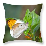 Giant Orange Tip Butterfly Throw Pillow