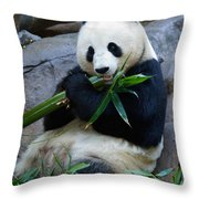 Giant Panda Throw Pillow