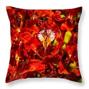 Giant Poinciana Blooms Throw Pillow