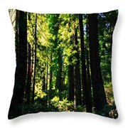 Giant Redwood Forest Throw Pillow