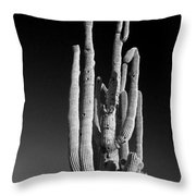 Giant Saguaro Cactus Portrait In Black And White Throw Pillow