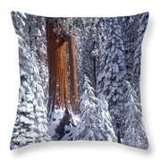 Giant Sequoia Trees Sequoiadendron Throw Pillow