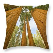 Giant Sequoias And First Snow Throw Pillow
