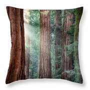 Giant Sequoias In Early Morning Light Throw Pillow