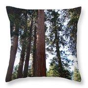 Giant Sequoias - Yosemite Park Throw Pillow