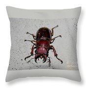 Giant Stag Beetle Throw Pillow