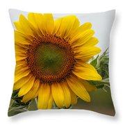 Giant Sunflower Throw Pillow