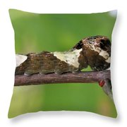 Giant Swallowtail Caterpillar Throw Pillow