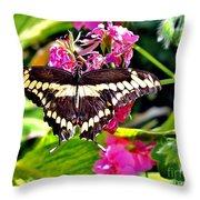 Giant Swallowtail Throw Pillow