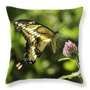 Giant Swallowtail On Clover 2 Throw Pillow