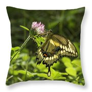 Giant Swallowtail On Clover 3 Throw Pillow