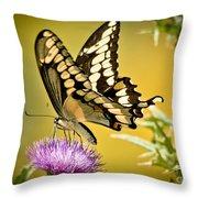 Giant Swallowtail On Thistle Throw Pillow