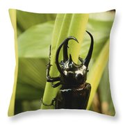 Giant Three-horned Beetle Throw Pillow