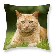 Ginger Cat In Garden Throw Pillow