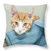 Ginger Kitten In A Basket Throw Pillow