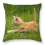 Ginger Tabby Kitten Throw Pillow