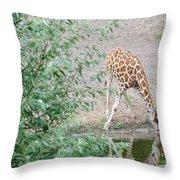 Giraffe Drinking Throw Pillow