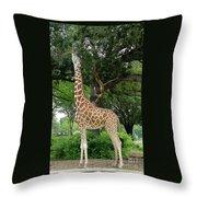 Giraffe Eats-09053 Throw Pillow