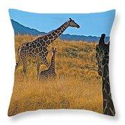 Giraffe Family In Living Desert Museum In Palm Desert-california Throw Pillow