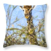 Giraffe Giraffa Camelopardalis Peeping From Acacia Throw Pillow