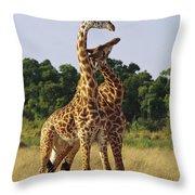 Giraffe Males Sparring Masai Mara Kenya Throw Pillow