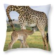 Giraffe Nuzzling Her Nursing Calf Throw Pillow