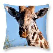 Giraffe Portrait Close-up. Safari In Serengeti. Throw Pillow