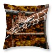 Giraffe Showing His 20 Inch Tongue Throw Pillow