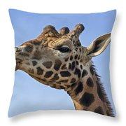 Giraffes 3 Throw Pillow