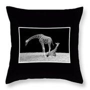 Giraffe's Throw Pillow