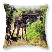 Giraffes On Savanna Eating. Safari In Serengeti Throw Pillow