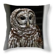 Give A Hoot Throw Pillow by John Haldane