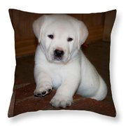 Give Me Your Paw Throw Pillow