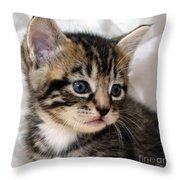 Gizmo The Kitten Throw Pillow