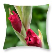 Gladiola Buds Throw Pillow