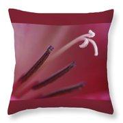 Gladiola Throw Pillow