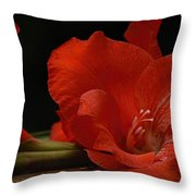 Gladiolus II Intimate Throw Pillow