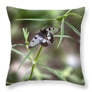 Glass-wing Butterfly Throw Pillow