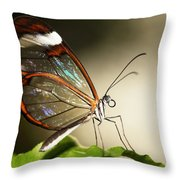 Glassed Wing Tropical Butterfly Throw Pillow