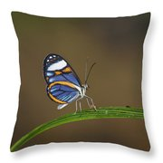 Glasswing On Leaf  Costa Rica Throw Pillow