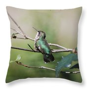 Glistening Hummer Throw Pillow