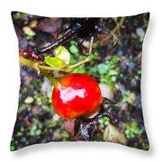 Glistening Wet Rose Hip Throw Pillow